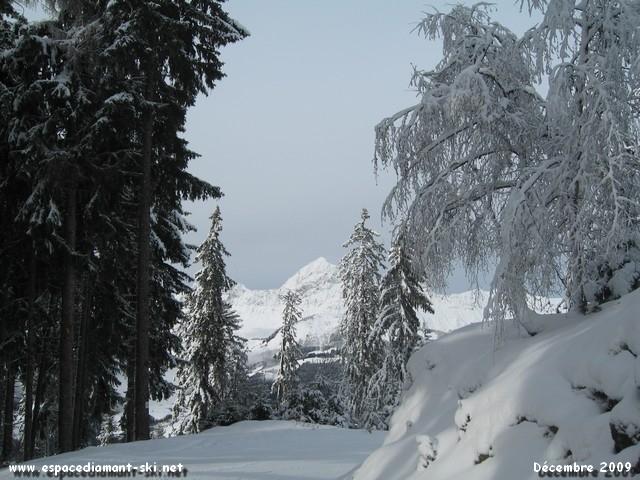 Sapins et neige avec le sommet du Mt Charvin en toile de fond