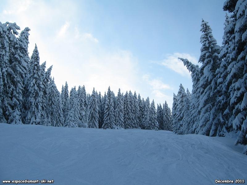 Les sapins plient sous le poids de la neige