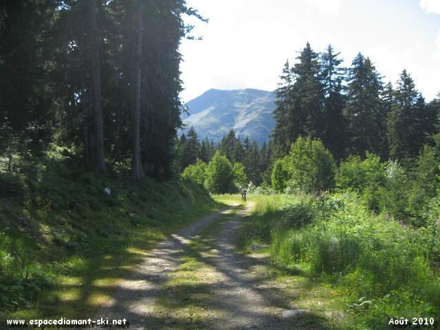 Chemin forestier assez large...