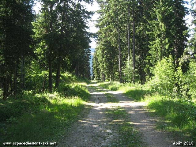 ...s'enfonçant peu à peu en forêt