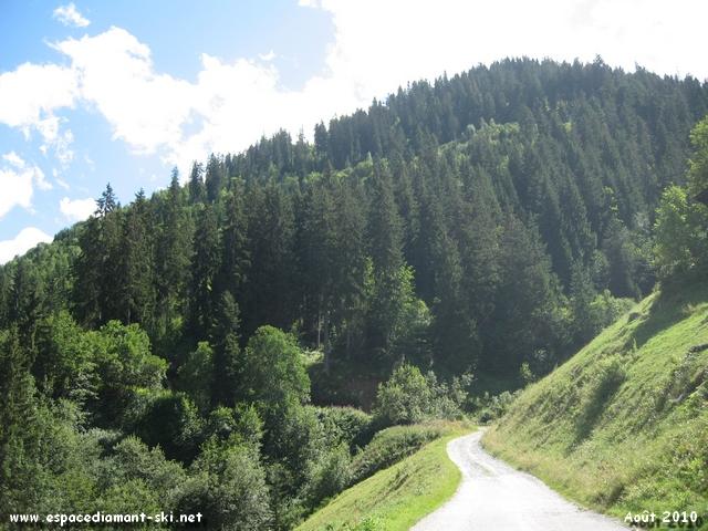 Regard en arrière et vue sur l'immense forêt de laquelle débouche l'itinéraire