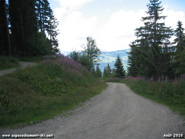 Large route foresti�re