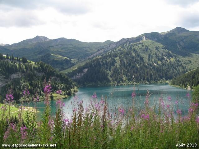 Le Lac et quelques épilobes