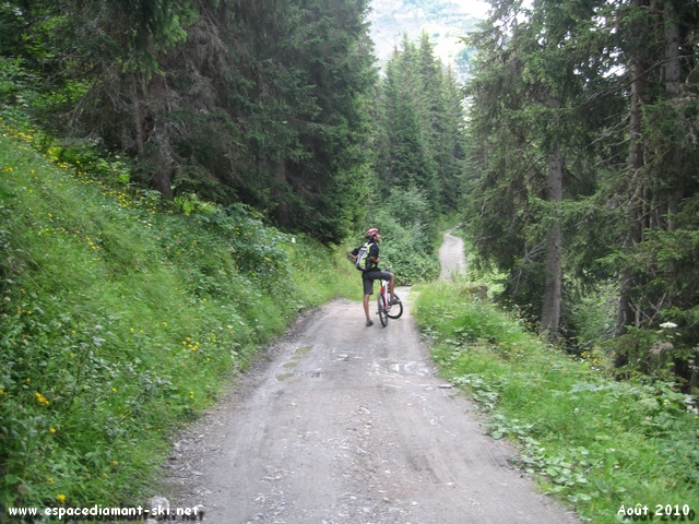 La première portion de l'itinéraire en forêt