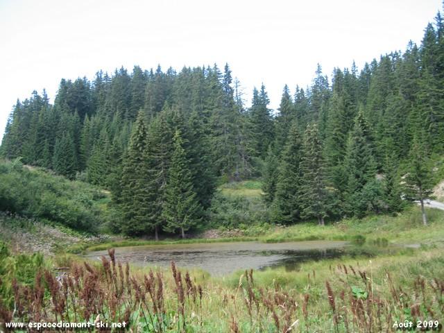 ...minuscule plan d'eau recouvert par des herbes et autres algues