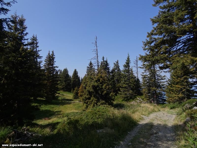 La Forêt de Bisanne