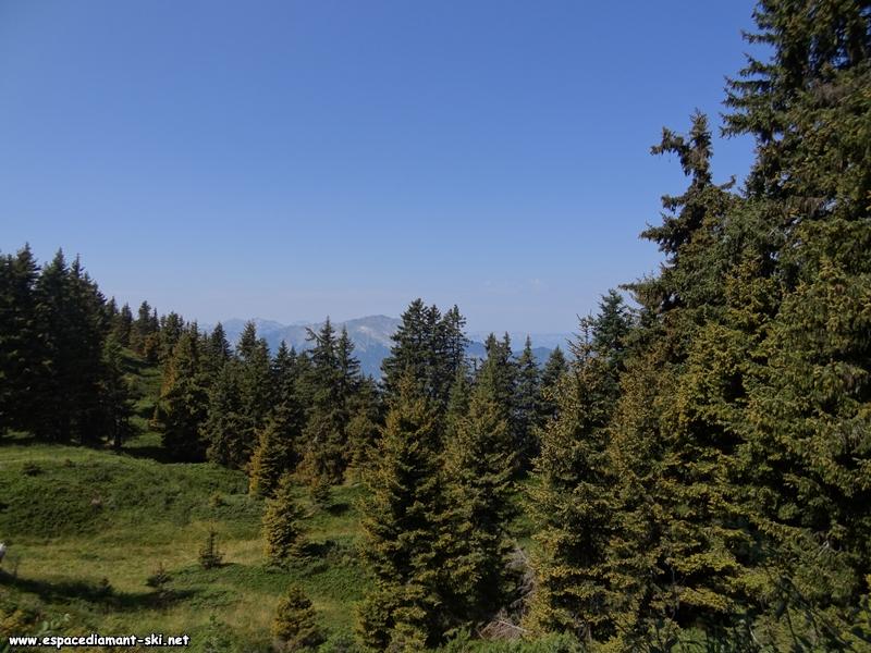 Les sapins et le massif des Bauges au loin