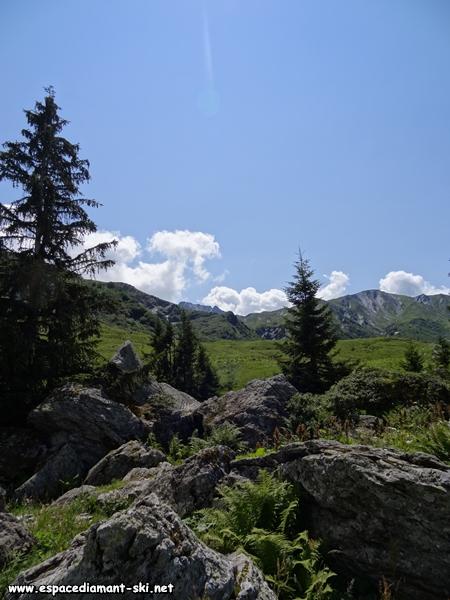 Rochers, sapins et ciel bleu