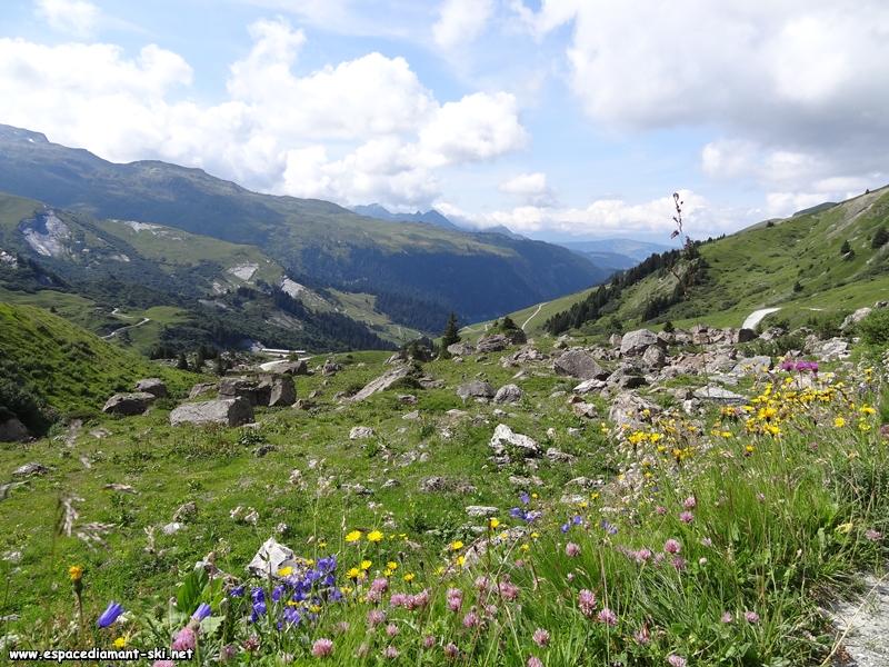 Fleurs et rocailles