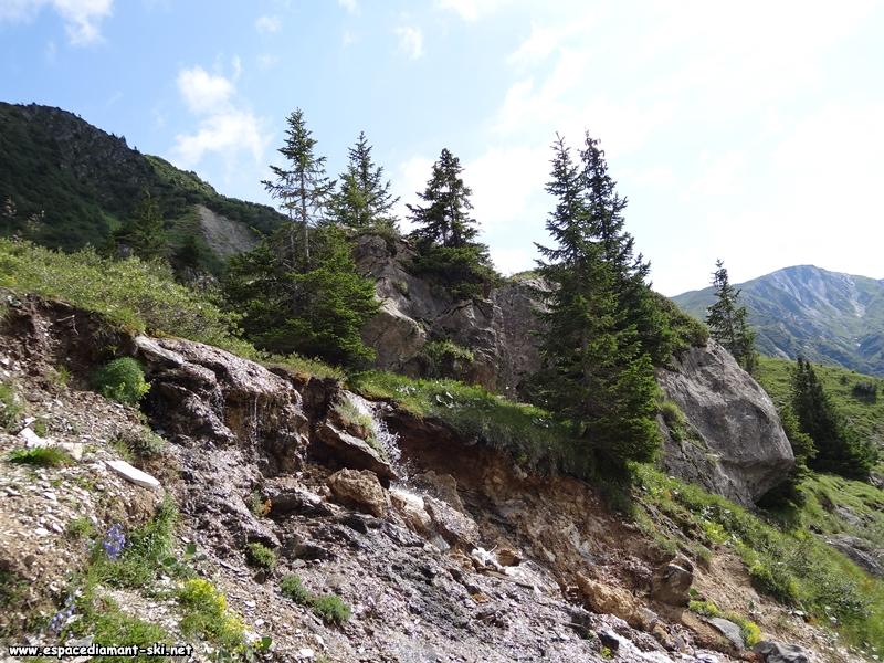 Sapins, rochers et ruisseau