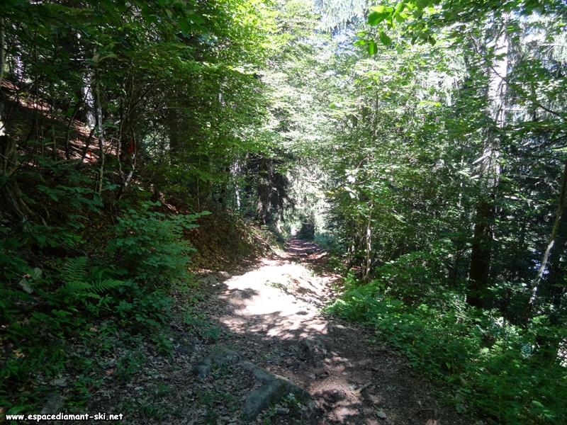 On entame un passage en forêt, délicat pour les vététistes