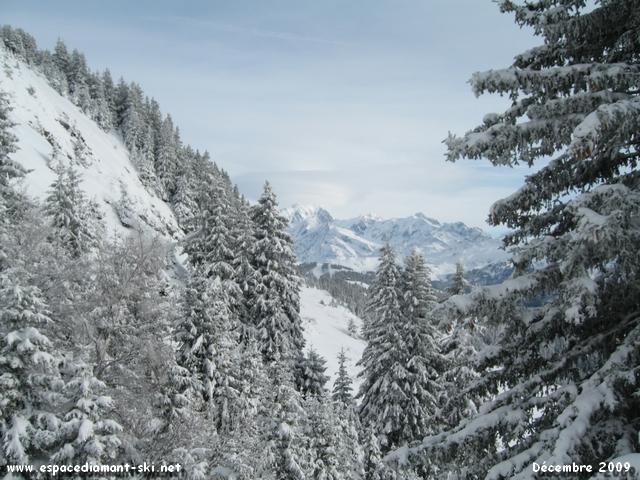 Sapins enneigés et Mont Blanc...