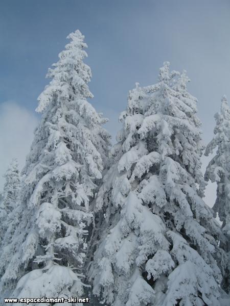 ...sous le poids de la neige