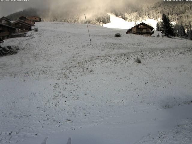 La neige est descendue jusqu'à Bisanne 1500, mais l'herbe n'est pas loin !